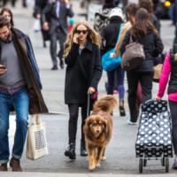 Flynn, Amanda Seyfried - New York - 25-11-2014 - Star come noi: la vita non è la stessa senza un cane