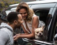 Chrissy Teigen, John Legend - New York - 02-12-2014 - Star come noi: la vita non è la stessa senza un cane