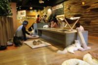 Cat Cafe - 18-01-2015 - I 10 ristoranti più strani al mondo: li hai mai provati?