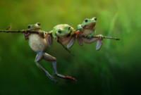 frog story, Harfian Herdi - Londra - 24-02-2015 - Annunciati i finalisti dei Sony World Photography Awards