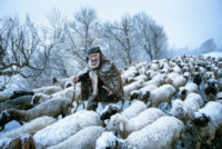 Old Shepherd, Saeed Barikani - Londra - 24-02-2015 - Annunciati i finalisti dei Sony World Photography Awards
