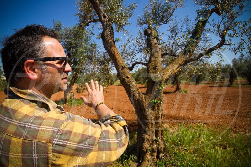 Ivano Gioffreda, Ulivo - Alezio - 10-05-2015 - Xylella, la piaga del Salento: santoni e scienziati si sfidano