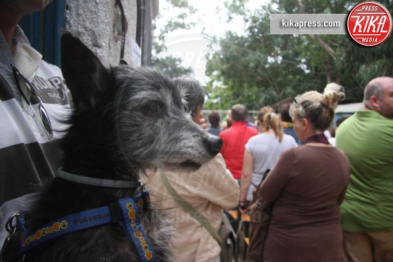 Cani e padroni - Palermo - 04-10-2015 - Don Gino Lo Galbo, il parroco che benedice gli animali