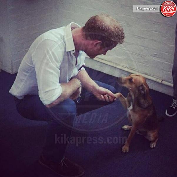 Principe Harry - 06-12-2015 - Star come noi: la vita non è la stessa senza un cane