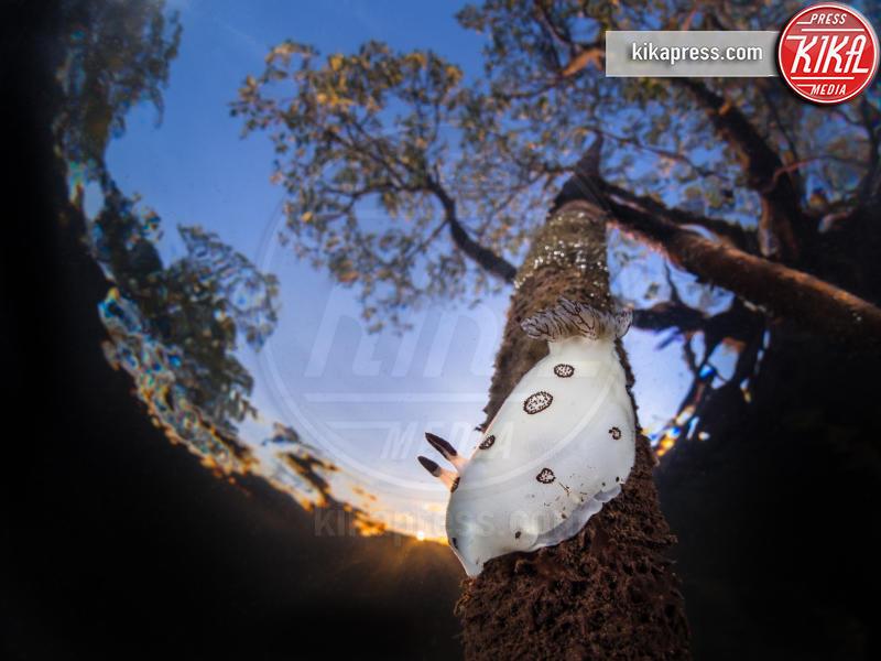 Mangrove sunset - Bangka Island - 21-03-2016 - Underwater Photographer of the Year:l'oceano visto dai fotografi