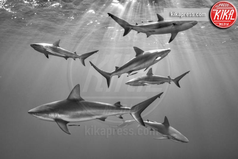 Seven - Gardens of the Queen - 21-03-2016 - Underwater Photographer of the Year:l'oceano visto dai fotografi