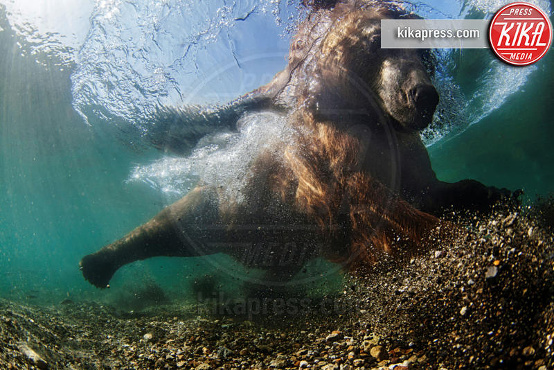 Underwater fisherman - Kurile Lake - 21-03-2016 - Underwater Photographer of the Year:l'oceano visto dai fotografi