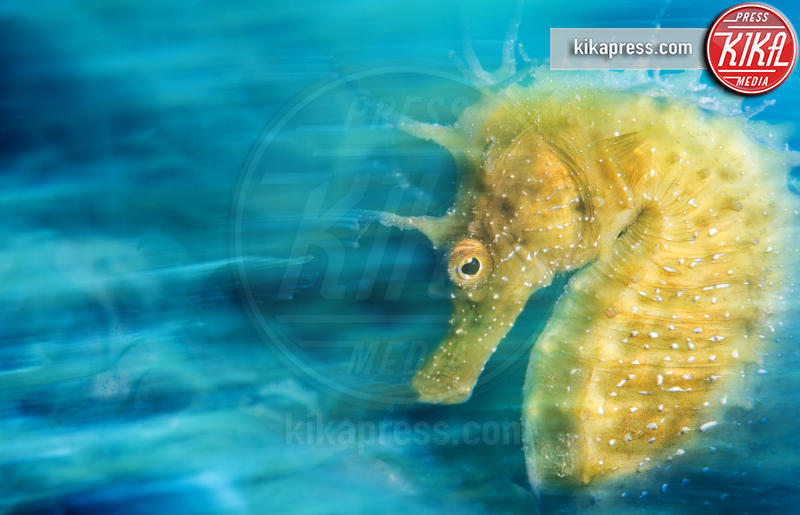 Gold - Sistiana - 21-03-2016 - Underwater Photographer of the Year:l'oceano visto dai fotografi
