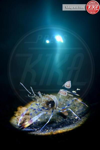 Lightning - Londra - 21-03-2016 - Underwater Photographer of the Year:l'oceano visto dai fotografi
