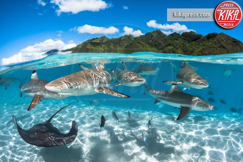 Lagoon - 21-03-2016 - Underwater Photographer of the Year:l'oceano visto dai fotografi