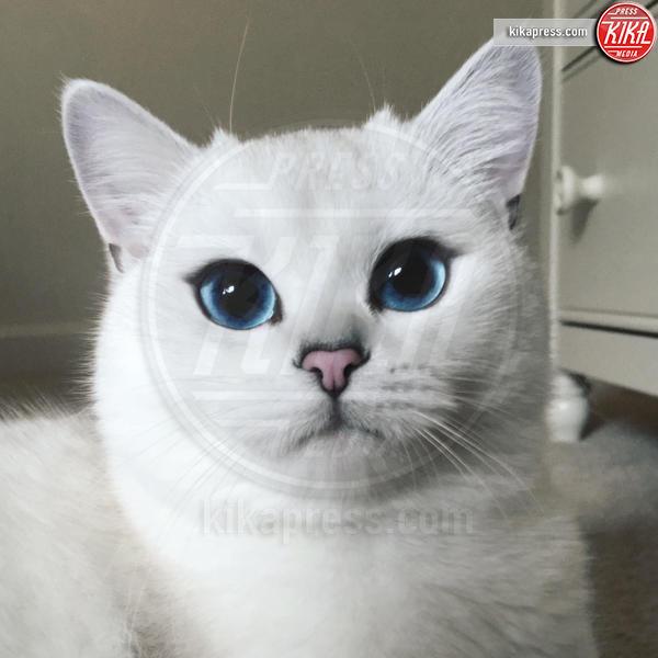 Coby - Baltimora - 10-03-2016 - Coby, il gatto con gli occhi più belli al mondo