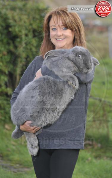Bluebell - 11-02-2016 - Bluebell: il coniglio che si crede un cane