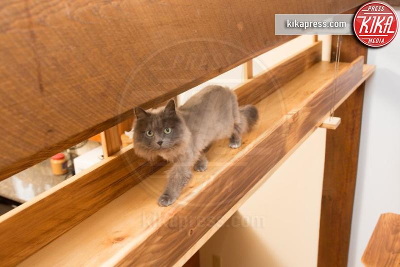 Casa Cat Friendly - America - 12-04-2016 - Gatti: ecco la prima casa cat friendly