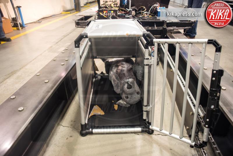 Crash Test Pets - Reston - 27-06-2016 - Paura in auto per i vostri animali? Arriva il Crash Test Pets!