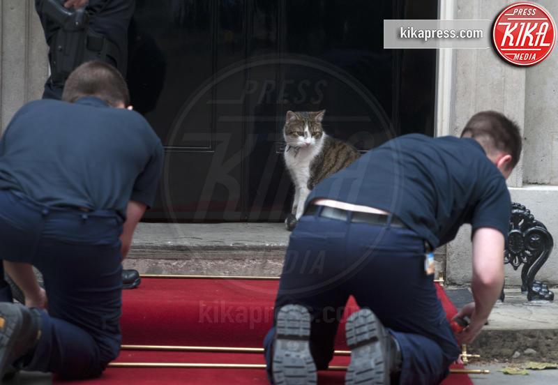 Il gatto Larry - Londra - 16-06-2013 - Resta a casa Larry: il gatto di Downing Street non trasloca