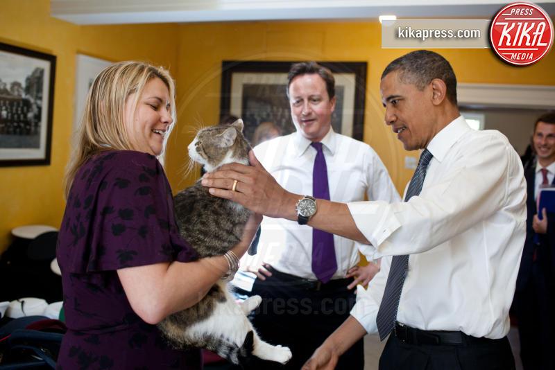 Il gatto Larry, David Cameron, Barack Obama - 25-05-2011 - Resta a casa Larry: il gatto di Downing Street non trasloca