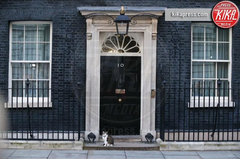 Il gatto Larry - Londra - 24-06-2016 - Resta a casa Larry: il gatto di Downing Street non trasloca
