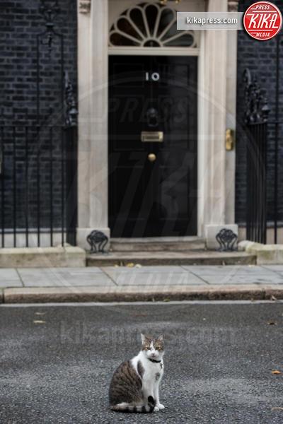 Il gatto Larry - Londra - 22-09-2015 - Resta a casa Larry: il gatto di Downing Street non trasloca