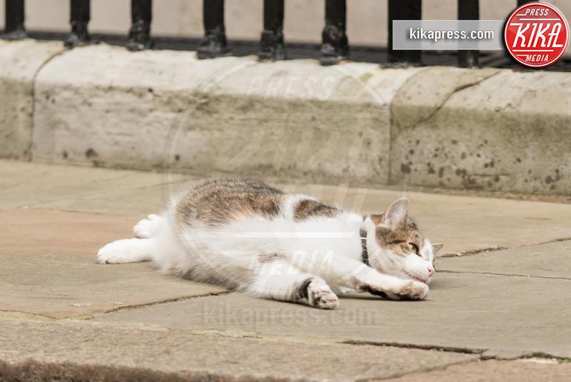 Il gatto Larry - Londra - 25-03-2015 - Resta a casa Larry: il gatto di Downing Street non trasloca