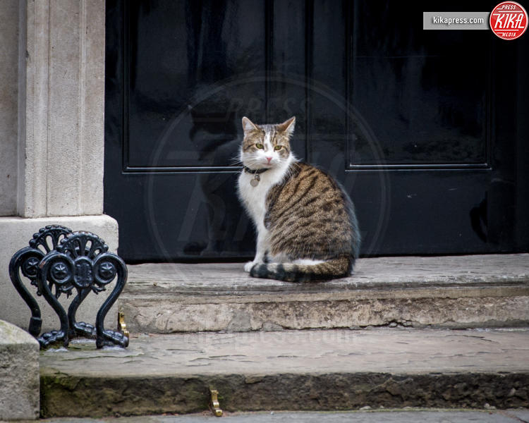 Il gatto Larry - Londra - 08-03-2016 - Resta a casa Larry: il gatto di Downing Street non trasloca