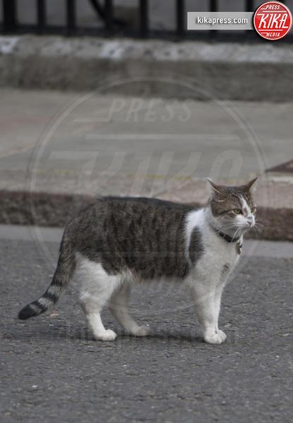 Il gatto Larry - Londra - 16-07-2013 - Resta a casa Larry: il gatto di Downing Street non trasloca