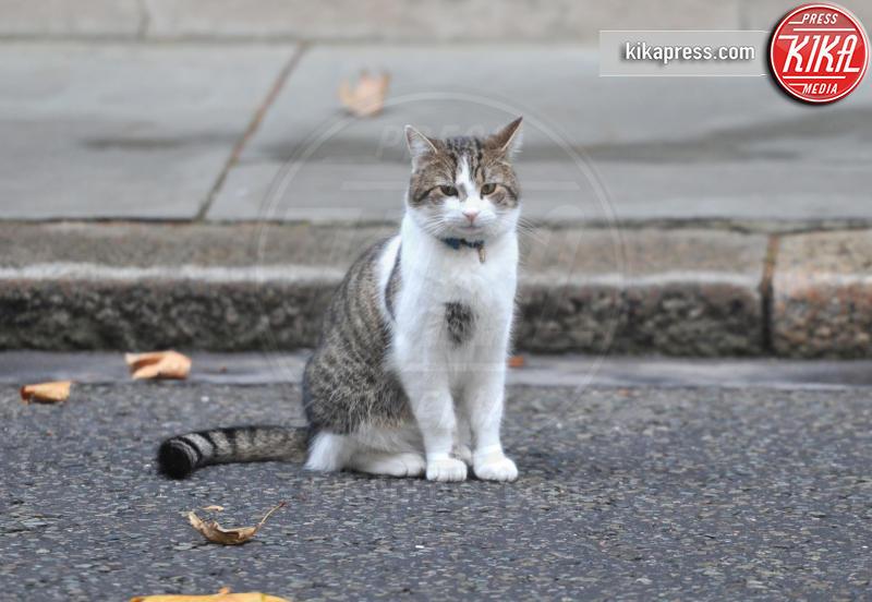 Il gatto Larry - Londra - 12-11-2011 - Resta a casa Larry: il gatto di Downing Street non trasloca