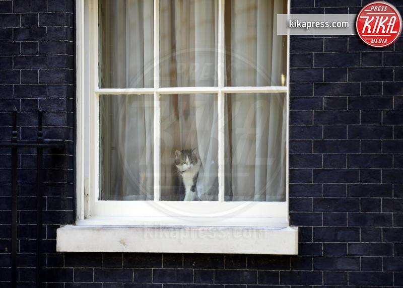 Il gatto Larry - Westminster - 24-07-2012 - Resta a casa Larry: il gatto di Downing Street non trasloca