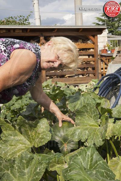Laura Contestabile - Fogliano Redipuglia - 02-09-2016 - Il giardino miracoloso: girasoli e zucche in formato XXL