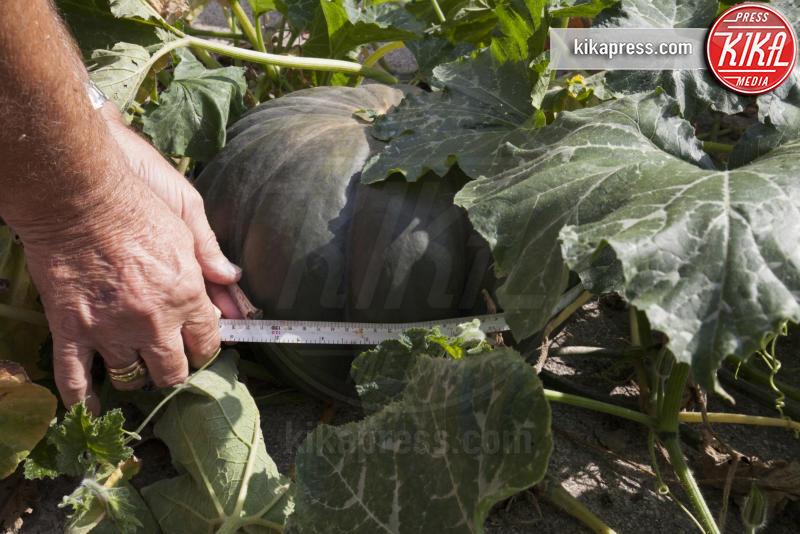 Oreste Giacovaz - Fogliano Redipuglia - 02-09-2016 - Il giardino miracoloso: girasoli e zucche in formato XXL