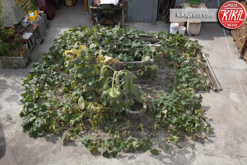 giardino - Fogliano Redipuglia - 02-09-2016 - Il giardino miracoloso: girasoli e zucche in formato XXL