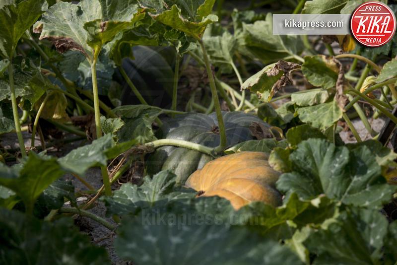 zucca - Fogliano Redipuglia - 02-09-2016 - Il giardino miracoloso: girasoli e zucche in formato XXL
