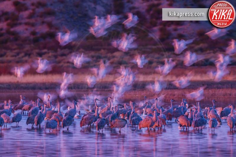 Natura - Los Angeles - 12-07-2015 - Le immagini più belle della natura selvaggia