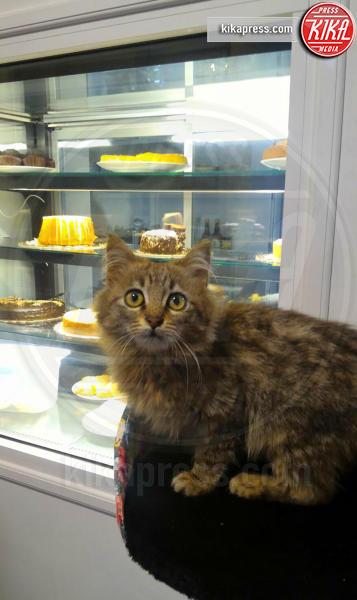 Nero Miciok, il primo Cat Bar vegano del Sud