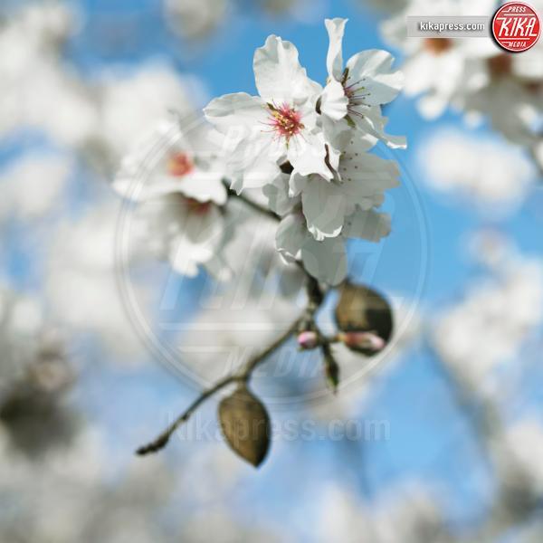 Almond tree flowers - 11-05-2017 - Alla scoperta della dieta di Meghan Markle