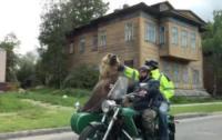 Orso in moto - Russia - 20-07-2017 - Avete mai visto un orso bruno in versione centauro?