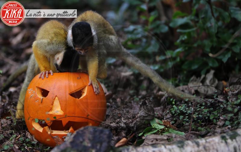 ZSL London Zoo, Squirrel monkey - Londra - 26-10-2017 - Boo at the Zoo: anche gli animali festeggiano Halloween