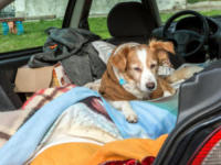 Spank Francesconi, Salvatore Francesconi - Lucca - 25-01-2018 - Salvatore vive in auto per non abbandonare Spank, il suo cane
