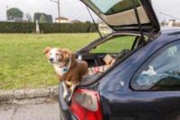 Spank Francesconi - Lucca - 25-01-2018 - Salvatore vive in auto per non abbandonare Spank, il suo cane
