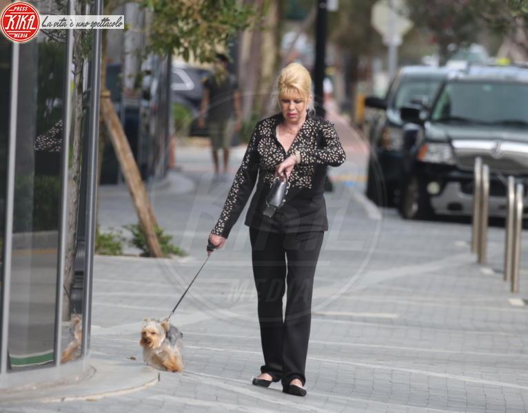 Dog Sitter Miami Beach