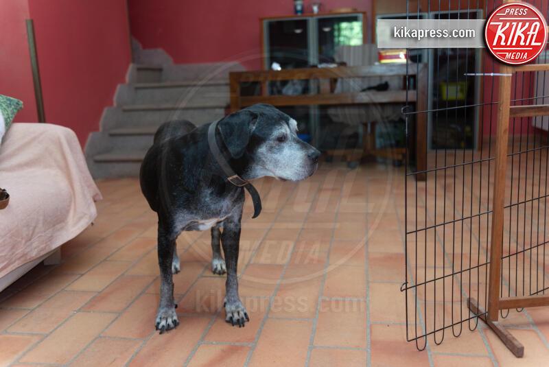 Baffi d'Argento, Daniela Salvi - 19-06-2019 - Baffi d'Argento: la prima casa di riposo per cani orfani