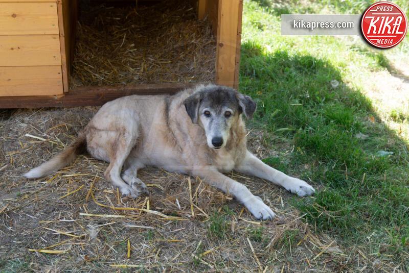 19-06-2019 - Baffi d'Argento: la prima casa di riposo per cani orfani