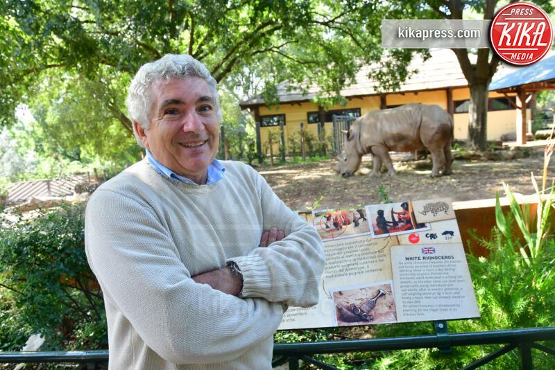 francesco peretti, thomas e Kibo, Rinoceronti - Roma - 03-10-2019 - Roma, tornano i rinoceronti bianchi: Thomas e Kibo al Bioparco