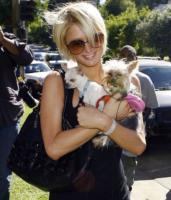 Paris Hilton - Hollywood - 08-10-2007 - Il cane di Paris Hilton si è innamorato di quello di Joel Madden