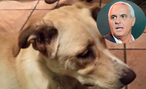 Giorgio Panariello - Los Angeles - 24-08-2015 - Le star e i cani, un amore più forte di tutto