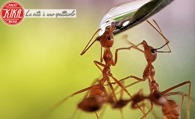 Thirsty ants - 27-10-2018 - Acqua, che meraviglia: le foto più belle