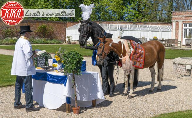 Cavallo Lewis - 14-04-2020 - Matrimoni vietati in tutto il Regno Unito, ma non per i cavalli!