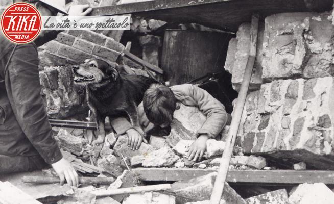 Cane ricerca e salvataggio, Rip - Londra - 06-05-2020 - V-E Day, gli animali eroi della seconda guerra mondiale