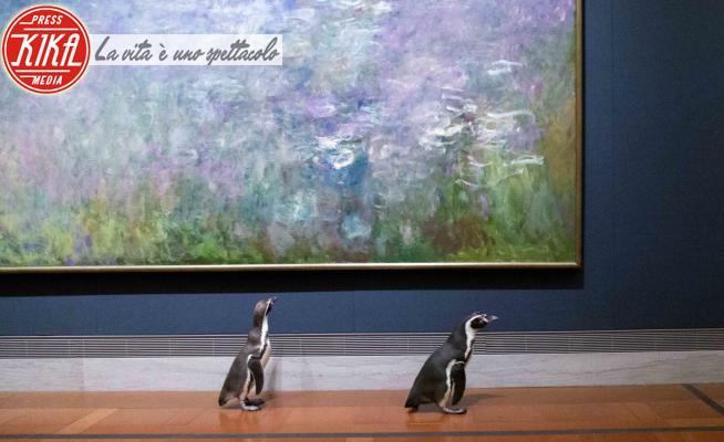 Pinguini al museo - Kansas City - 19-05-2020 - Pinguini al museo: visitatori alternativi durante il lockdown