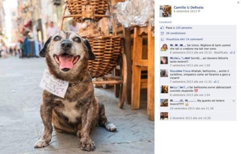 Camillo cane - Sanremo - 06-02-2014 - Facebook: offline in tutto il mondo per pochi minuti