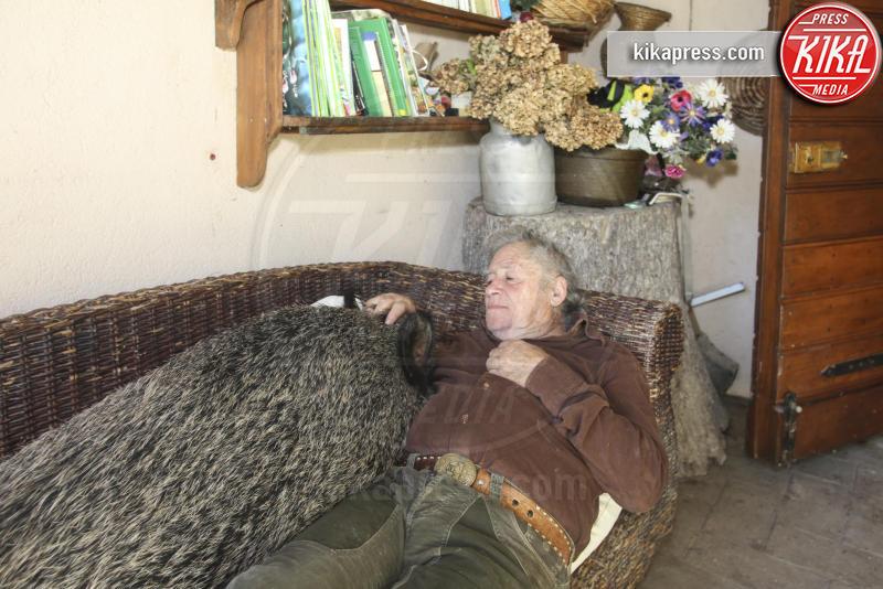 Cinghiale Pasqualina, Doriana e Raffaele - Perugia - 08-11-2015 - Cani o gatti? Meglio Pasqualina, il cinghiale domestico